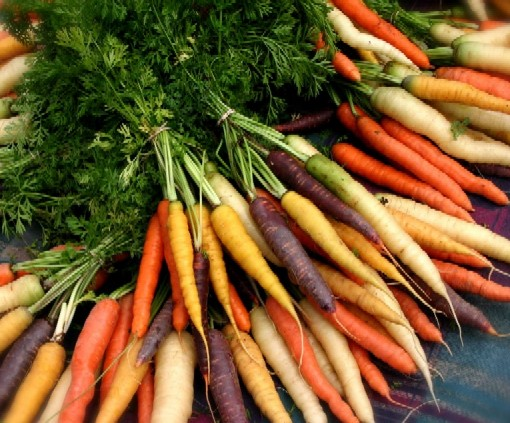 carrot different colors
